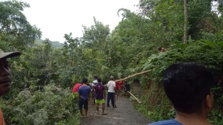 Wukirsari : Hujan Lebat Sebabkan Pohon Tumbang