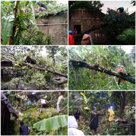 FPRB Bima Sakti Evakuasi Pohon Tumbang